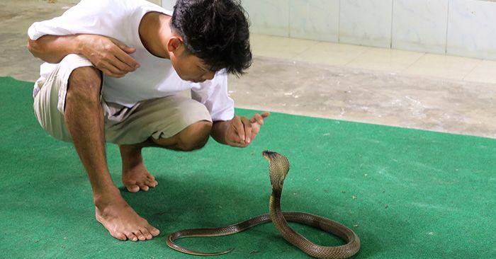 Ловец на змии